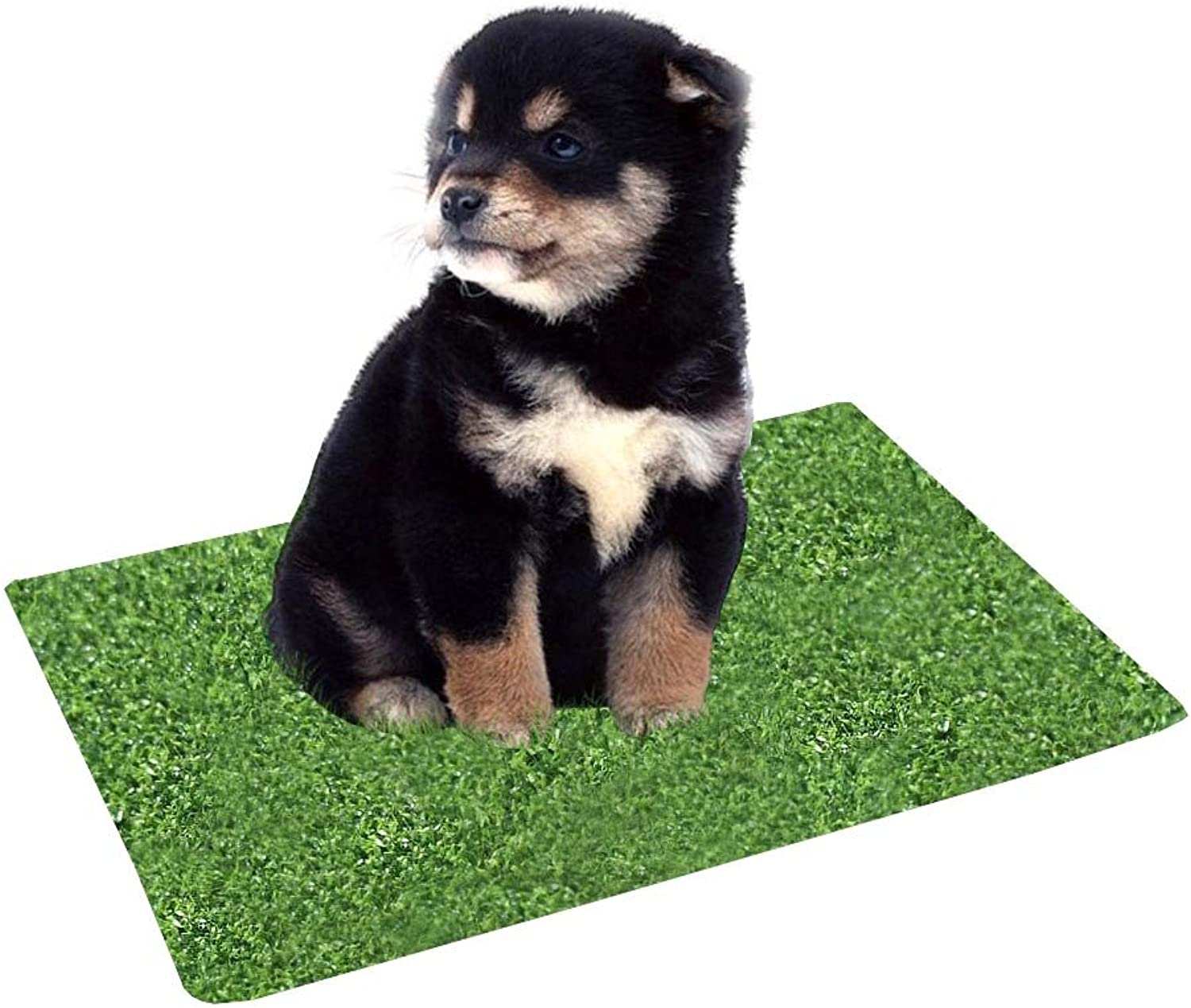 Kwan 2Pack Artificial Grass Turf Training Pad Replacement for Pet Potty Toilet Trainer for Puppy Dog Pee Indoor Home Large Indoor Outdoor