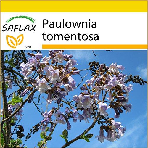 SAFLAX - Set de cultivo - Paulonia - 200 semillas - Con mini-invernadero, sustrato de cultivo y 2 maceteros - Paulownia tomentosa