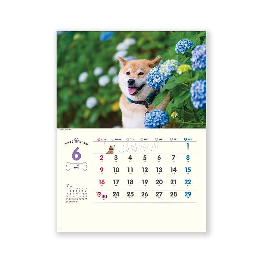 規模バッテリー台無しに新日本カレンダー 2019年 柴犬まるとおさんぽ カレンダー 壁掛け NK35 (2019年 1月始まり)