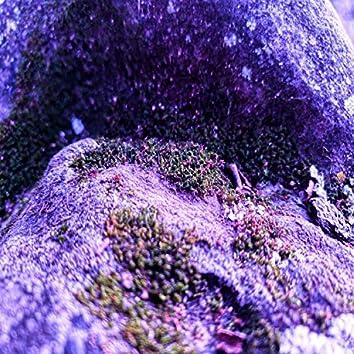 Way Too Purple