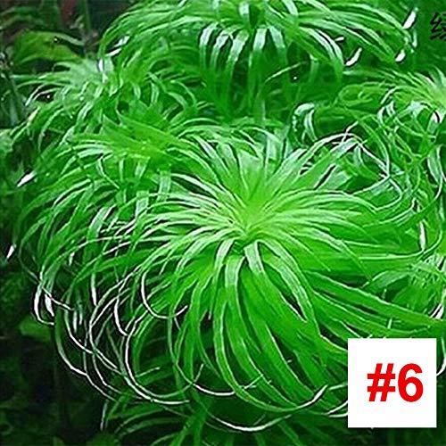 Rosepoem Aquarium Wasserpflanze Samen Aquarium Wasser Grassamen Aquarium Tempel Pflanzensamen, 1000 Teile/Paket - # 6