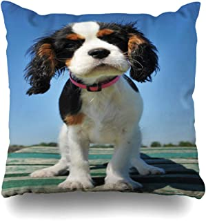 Ahawoso Throw Pillow Cover Decorative Square 18x18 Blue Baby Young Puppy Cavalier King Charles Tricolor Animals Wildlife Spaniel Beautiful Canine Cocker Zippered Pillowcase Home Decor Cushion Case