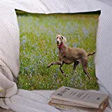 Decorative Throw Pillow Covers Soft Square Red Across Beautiful Hungarian Breed Brown Vizsla Dog Animals Wildlife Weimaraner Parks Attribute Pillowcase Cushion Cover for Couch Chair Bed 18x18 Inch