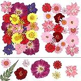 46 Stück echte, getrocknete gepresste Blumen, 9 Arten gepresste Blumen, Blätter, Herbarium zum...