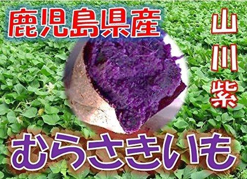 鹿児島県産 むらさきいも 紫芋 「山川紫」 1箱:約2kg サイズ:小粒(2S・3S) 新芋(2019年産)
