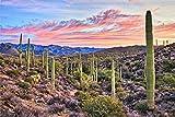 Kakteen Kaktus Landschaft Natur Bild XXL Wandbild
