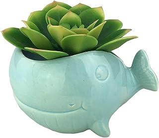 "VanEnjoy 5"" Ceramic Succulent Pot, Cute Ocean Blue Seashell Series, Conch Shaped Cactus Pot Planter, Flower Pot, Pottery B..."