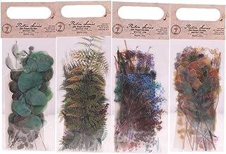 Lychii Autocollants de Scrapbooking, Ensemble d'autocollants Auto-adhésif avec Motif de Plantes Naturelles, Sticker Set po...