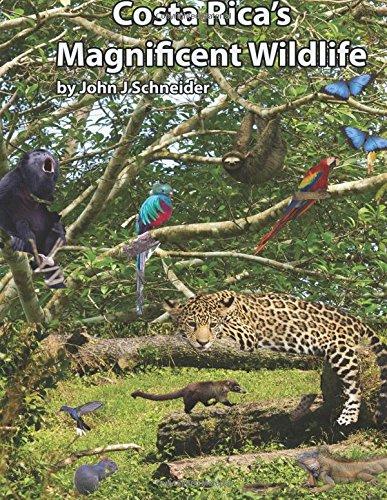 Costa Rica's Magnificent Wildlife
