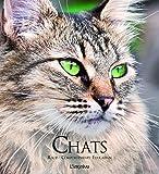 Chats : Races, comportements, éducation