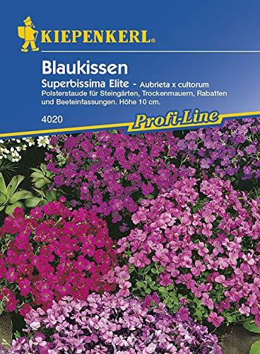 Kiepenkerl Blaukissen Superbissima Elite - Aubrieta x cultorum
