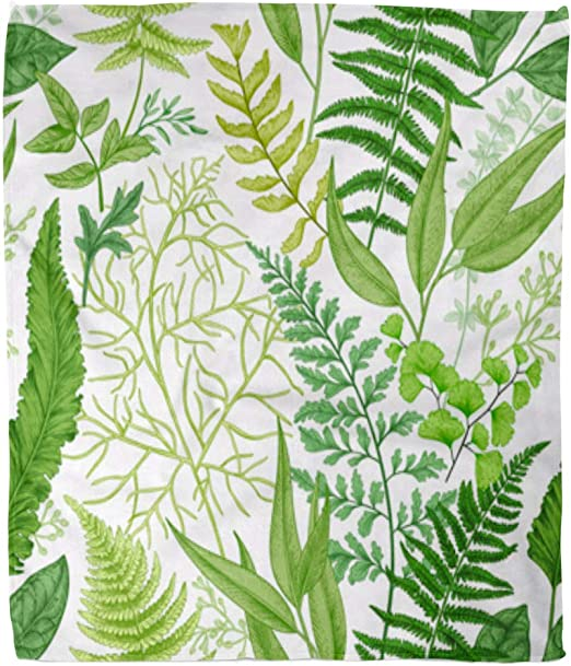 Amazon Com Golee Throw Blanket Pattern Spring Leafy Green Vintage Floral Different Ferns Botanical Leaf 60x80 Inches Warm Fuzzy Soft Blanket For Bed Sofa Home Kitchen