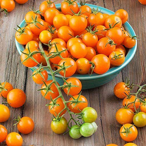 Sun Gold Hybrid Tomato Seeds (40 Seed Pack)