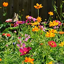 Late Blooming Wildflower Mix 500 Seeds autumn fall variety