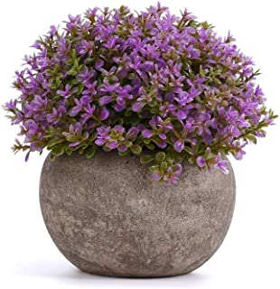 Round Artificial Potted Plant for Home Office Decor Fake Purple Plant Indoor 5 Inch x 5 Inch  Set of 1