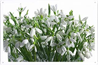 Flower Tin Sign Snowdrops Flowers Bouquet Vase White Primrose Spring 37089 by Waller's Decor (7.8