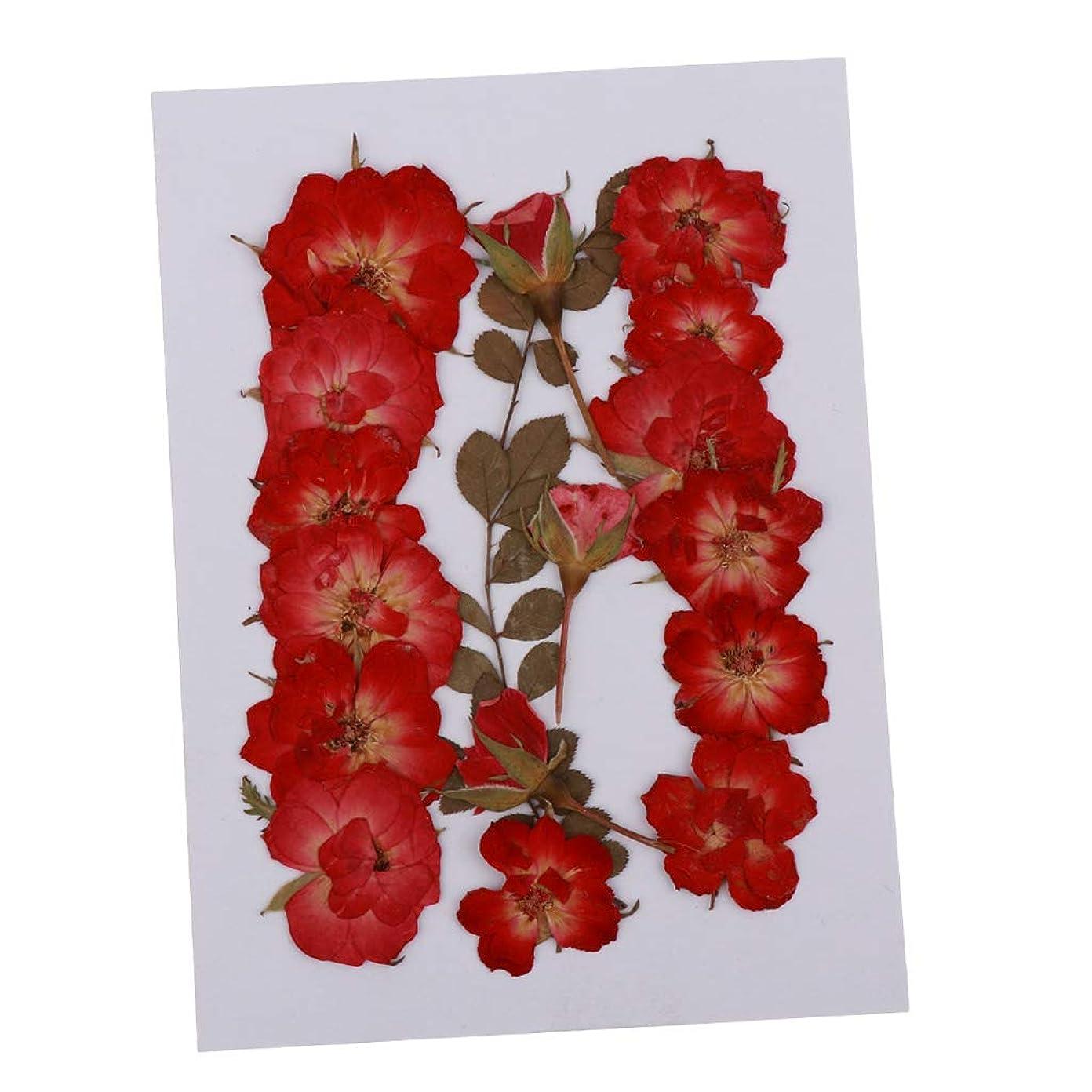 また明日ねクーポンナチュラルjoyMerit 複数の押し花、バラのつぼみの葉、手作りのスクラップボッキングウェディングカード用の実際の押し花ドライフラワーDIY樹脂ジュエリークラフトフローラルアートインテリア