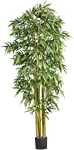 natural bamboo tree