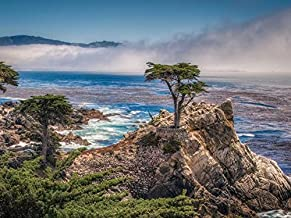The Lone Cypress On Pebble Beach California Hdr -Oil Painting On Canvas Modern Wall Art Pictures For Home Decoration Wooden Framed (20X16 Inch, Framed)