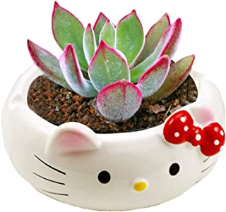 Best hello kitty pot Reviews
