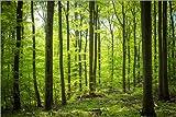 Poster 90 x 60 cm: Frisches Grün - Buchenwald im Harz von