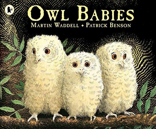Owl Babies. (Bilderbücher)