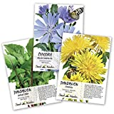 Seed Needs, Dandelion Seed Collection (3 Individual Packets) Non-GMO
