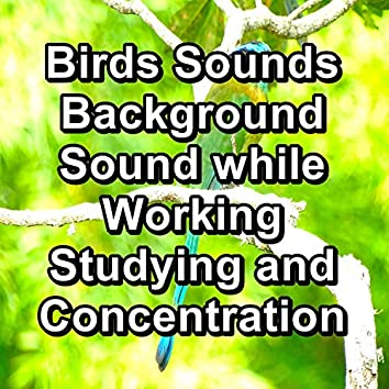 Birds Sounds Background Sound while Working Studying and Concentration
