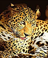 WJYMJJ DIY 数字油絵 ヒョウ 数字油絵 プレゼント 大人の子供手塗DIYりデジタル油絵 でペイントホームデコレーション 40x50(フレームレス)