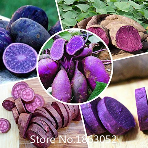 .100 Seeds/Pack.Annual Fruit and Vegetable Seeds...