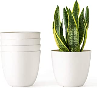 Best pots and plants Reviews