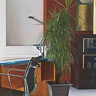 Euro3Plast 1481.01 Medea Plato para maceta color terracota 32 cm