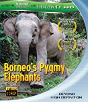 Borneos Pygmy Elephants [Blu-ray] [Import]