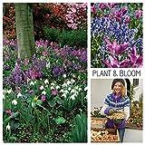Plant & Bloom - Bulbes de fleurs, mix Clochettes bleues, Fritillaires, Perce-neige, Jonquilles Narcisses – 50 ampoules, plantation d'automne, floraison printanière – Qualité supérieure hollandaise