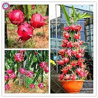 AGROBITS 200pcs Pitaya Bonsai Plants Dwarf Dragon Fruit Tree Delicious Juicy Edible Plants Potted for Home Garden Supplies