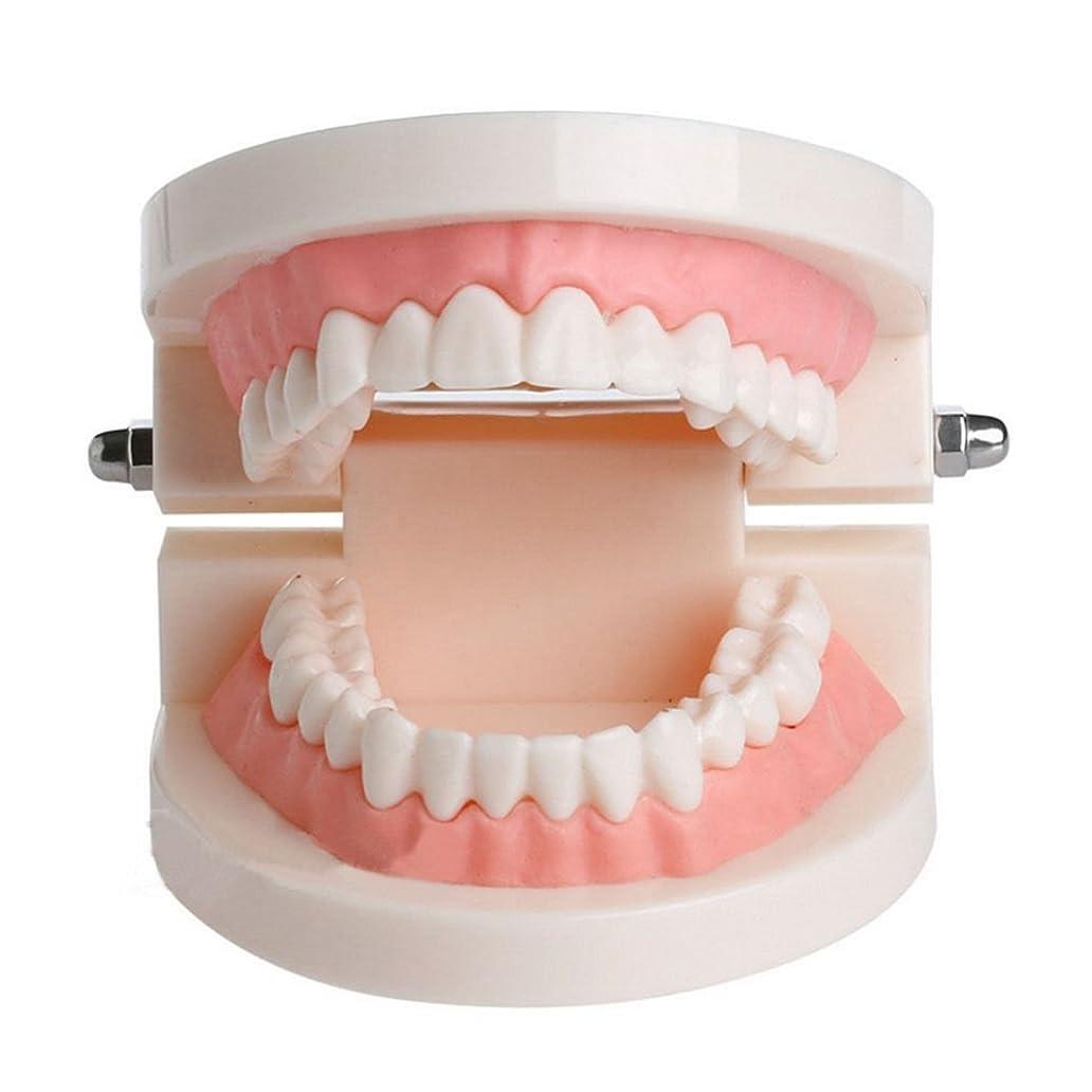 構成する郡とんでもないAngzhili 上下顎模型 歯形模型 歯列模型 180度 開閉式 指導 教育 練習 デモンストレーション 学習用小型モデル
