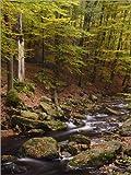 Poster 30 x 40 cm: Naturpark Hohes Venn-Eifel, Hoegne