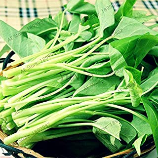 WANCHEN 100pcs/bag Spinach Vegetable Bonsai Kangkong, River Spinach, Chinese Spinach or cress Easy-Growing Heirloom Plants (Seeds not Plants)