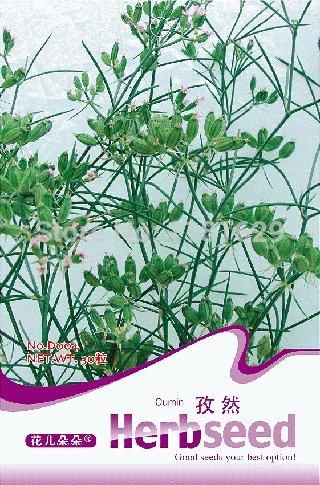 (Mélanger l'ordre minimum 5 $) 1 original paquet de 30 pcs de graines de cumin, plantes graines de fleurs