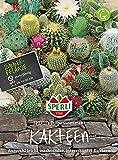 85589 Sperli Premium Kakteen Samen Mix | Sukkulenten Samen Mischung | Kakteen Saatgut | Kaktus Samen | Zimmerpflanzen