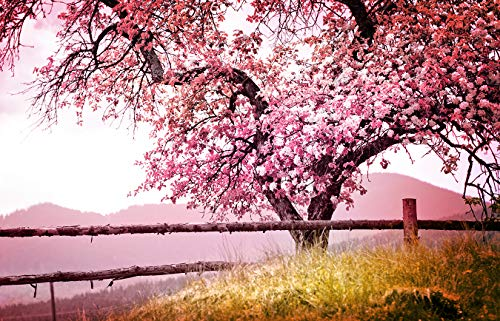 Fototapete selbstklebend | Frühlingsbaum | in 155x100 cm | Bild-tapete Moderne Wand-deko Dekoration Wohnung Wohnzimmer Wandtapete rosa pink | 501260