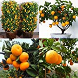 Mosichi 30Pcs Edible Fruit Mandarin Tangerine Orange Seeds Bonsai Potted Plant Decor