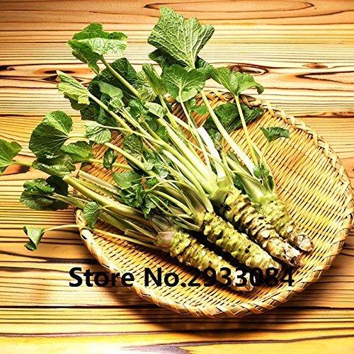 200 Unids/lote Wasabi Semillas, Vegetales De Semilla De Rábano Picante Japonés Para Plantar Fácil De Cultivar Plantas Bonsai...