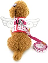 Zunea Pet Fancy Dots Angel Wings Walking Vest Harness Leash Set for Small Dog Cat No Pull Soft Mesh Padded