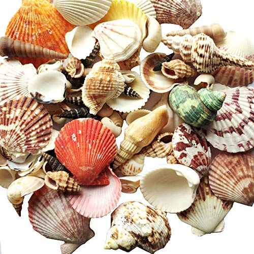 Nuluxi Conchas de Mixtas Naturales Conchas Manualidades de Bricolaje Coloridas Conchas Marinas Naturales Adecuado para Boda con Tema en la Playa, Manualidades, Artesanías, Pecera y Relleno de Jarrones