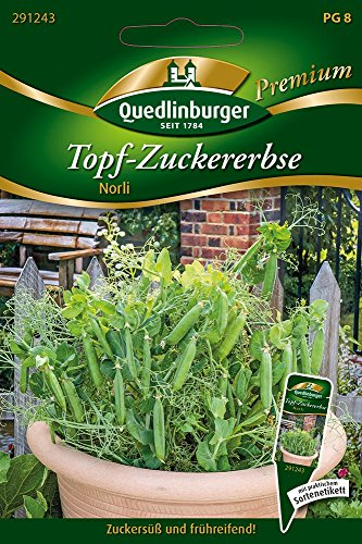 Quedlinburger 291243 Topf-Zuckererbsen Norli (Zuckererbsensamen)