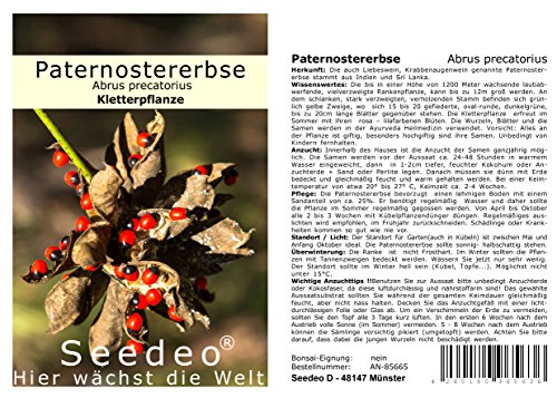 Seedeo® Paternostererbse (Abrus precatorius) 20 Samen