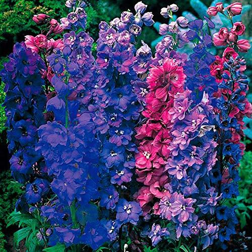 Keland Garten - 100pcs Raritäten Blauer Rittersporn Rosa/mix, bis zu 1,80 m hohen Blütenständen, Blumensamen Mischung winterhart mehrjährig für Staudenbeet