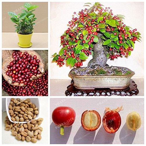 20 semillas / bolsa de Coffea arabica Semillas Semillas del grano de café Tropical Bonsai árbol perenne de frutas semillas de árboles de café para el hogar jardín de la planta
