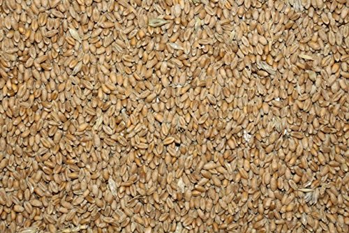 FutterXL 25 kg Weizen, direkt vom Landwirt